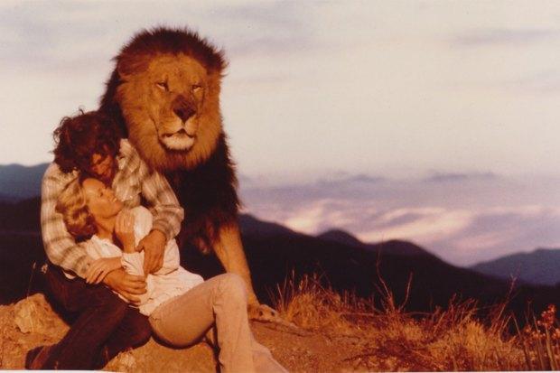 Roar 1981